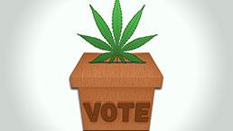 Marijuana Ballot Initiative