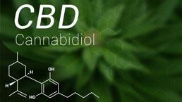 Marijuana CBD Cannabidiol