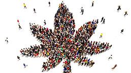 Majority Support Marijuana legalization
